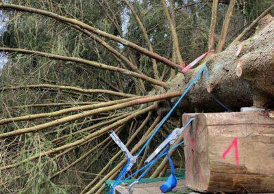 ikw-gmbh-weihnachtsbaum-bundestag-2020-6